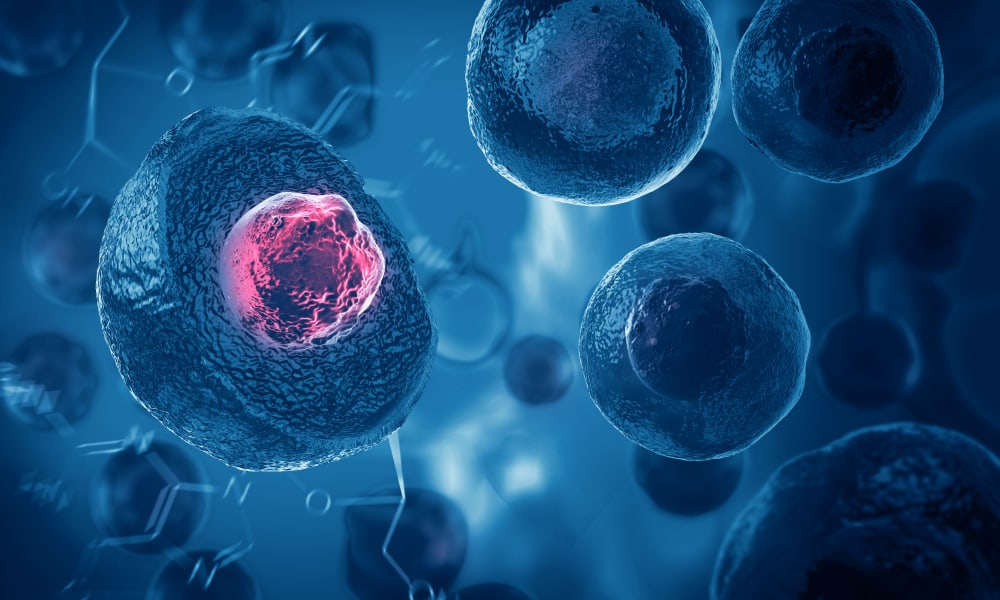 What is Adipose Stem Cell Therapy?